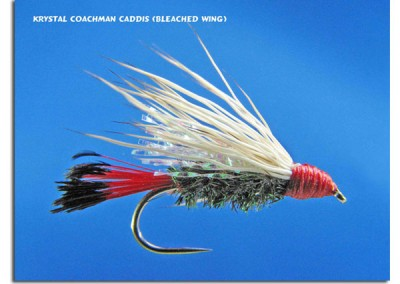 Krystal Coachman Caddis (Bleached Wing)
