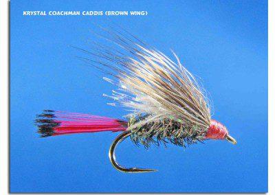 Krystal Coachman Caddis (Brown Wing)