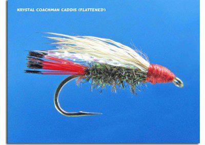Krystal Coachman Caddis (Flattened)