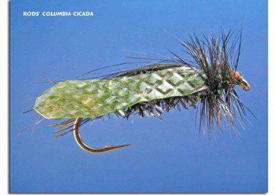 Rod's Columbia Cicada